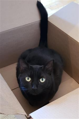 Photo of my black cat in a box.